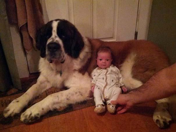 Μωρά με τον μεγάλο σκύλο τους (8)