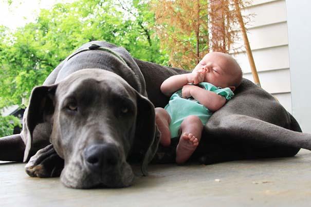 Μωρά με τον μεγάλο σκύλο τους (9)
