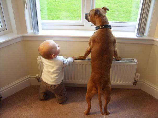Μωρά με τον μεγάλο σκύλο τους (10)