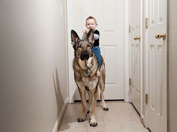 Μωρά με τον μεγάλο σκύλο τους (11)