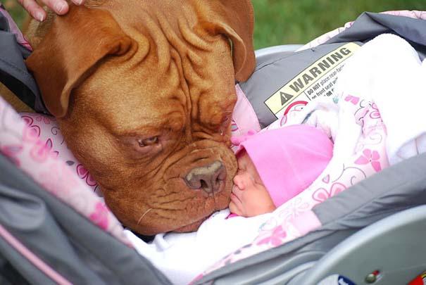 Μωρά με τον μεγάλο σκύλο τους (12)