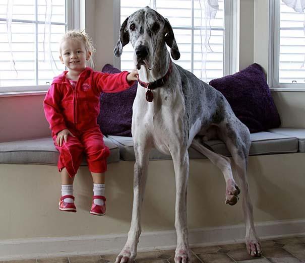 Μωρά με τον μεγάλο σκύλο τους (15)