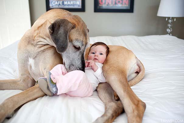 Μωρά με τον μεγάλο σκύλο τους (17)