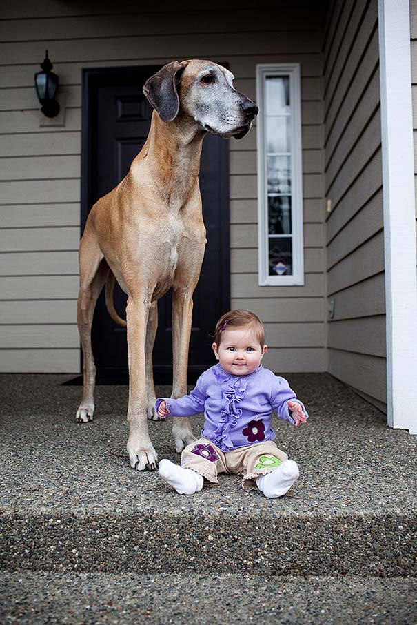 Μωρά με τον μεγάλο σκύλο τους (21)