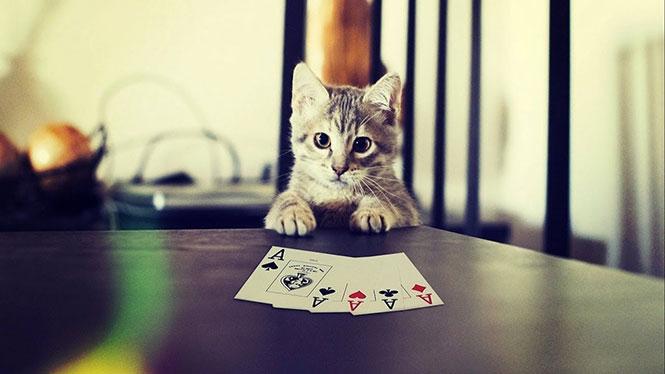 Όταν οι γάτες παίζουν χαρτιά
