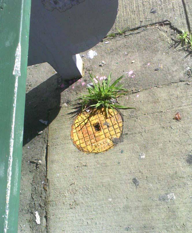 Όταν η τέχνη του δρόμου γίνεται ένα με το περιβάλλον (4)
