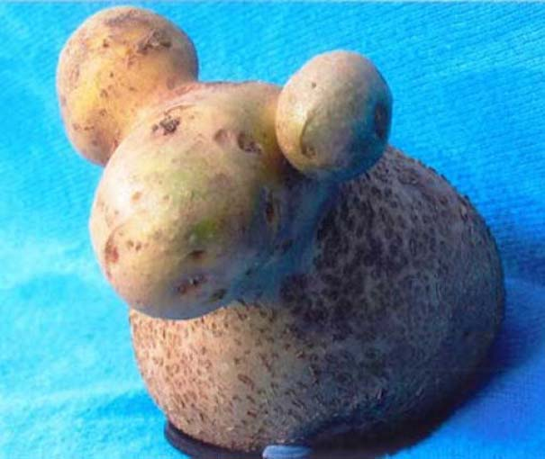 Παράξενα κι αστεία φρούτα & λαχανικά (2)