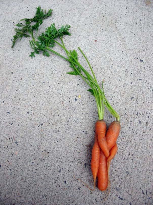 Παράξενα κι αστεία φρούτα & λαχανικά (7)