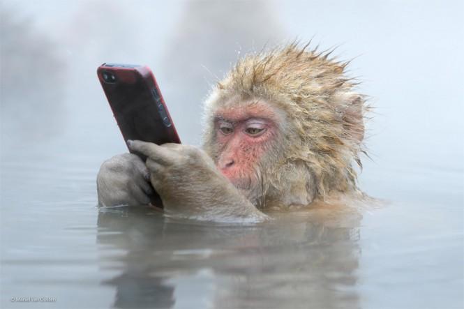 Δεν γίνεται χωρίς smartphone στις μέρες μας | Φωτογραφία της ημέρας