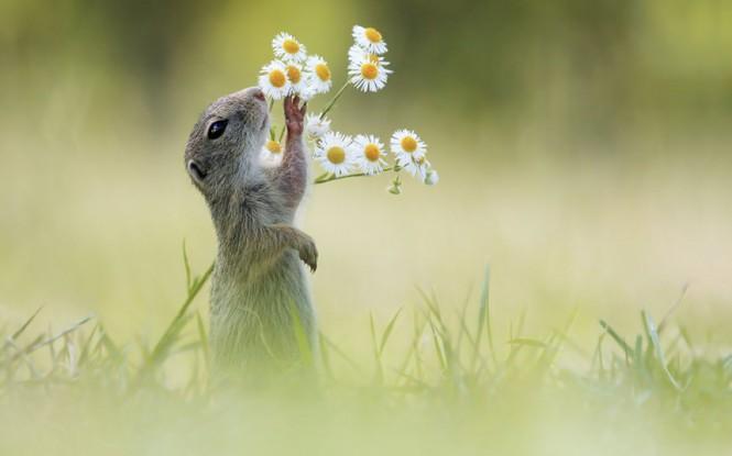 Ένας σκίουρος απολαμβάνει την φύση | Φωτογραφία της ημέρας