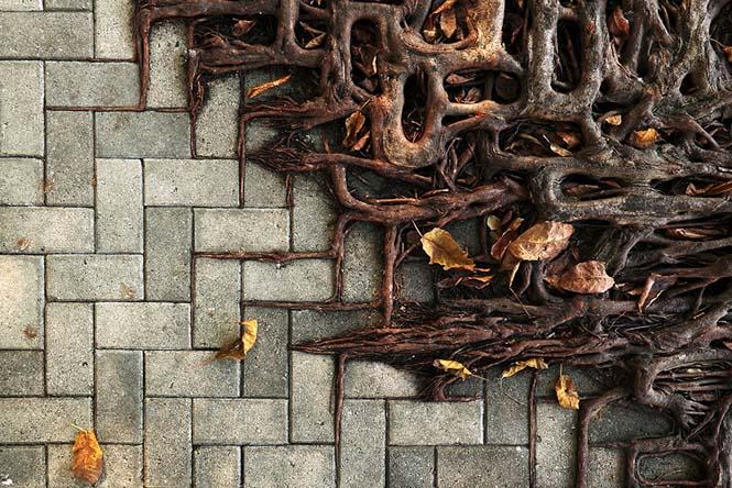 Ρίζες δένδρων που κέρδισαν την μάχη με το τσιμέντο (9)