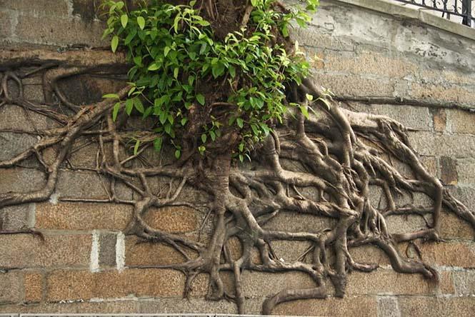 Ρίζες δένδρων που κέρδισαν την μάχη με το τσιμέντο (11)