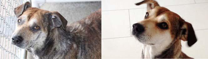Σκύλοι πριν και μετά τη διάσωση τους (2)