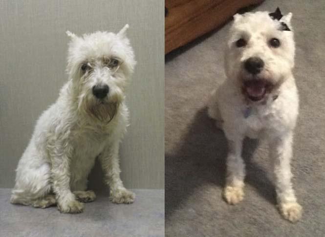 Σκύλοι πριν και μετά τη διάσωση τους (3)