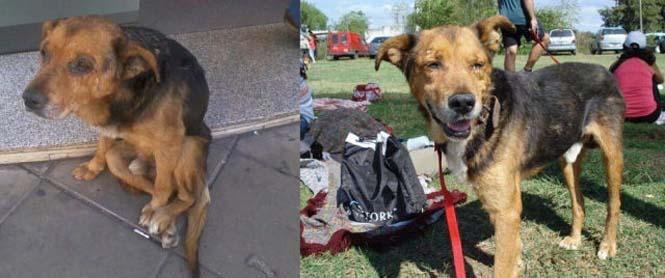 Σκύλοι πριν και μετά τη διάσωση τους (4)