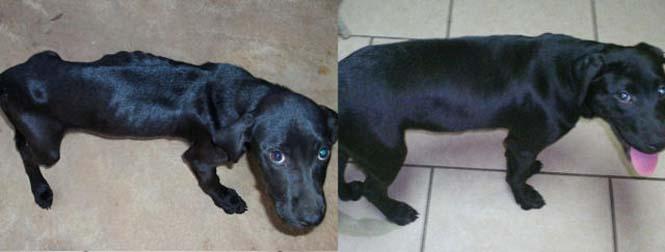 Σκύλοι πριν και μετά τη διάσωση τους (9)