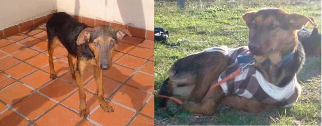 Σκύλοι πριν και μετά τη διάσωση τους (10)