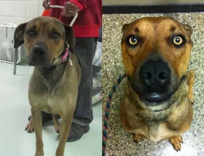 Σκύλοι πριν και μετά τη διάσωση τους (20)