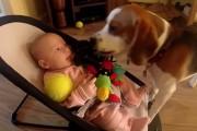 Η απίθανη συγνώμη ενός σκυλου που έκλεψε το παιχνίδι ενός μωρού