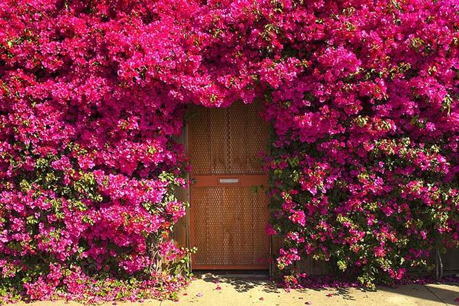 Υπέροχες πόρτες (16)