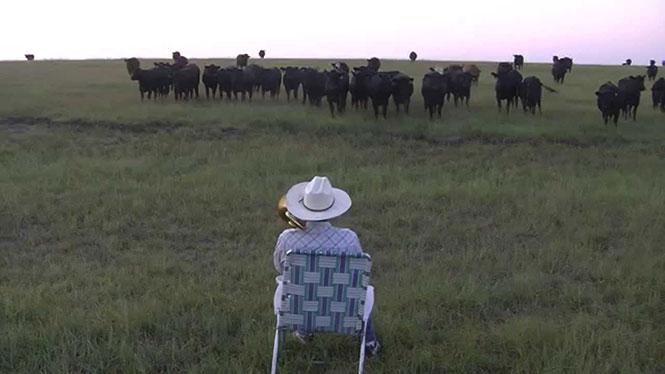 Αγρότης αποδεικνύει ότι οι αγελάδες λατρεύουν την μουσική