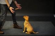 Οι απίθανες αντιδράσεις σκύλων σε ένα λουκάνικο που αιωρείται