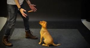 Οι απίθανες αντιδράσεις σκύλων σε ένα λουκάνικο που αιωρείται (Video)