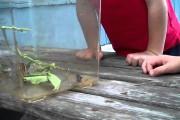 Η απίθανη αντίδραση ενός αγοριού όταν μια πεταλούδα κάθεται στο πρόσωπο του