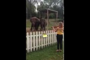 Ελέφαντες χορεύουν υπό τους ήχους βιολιού