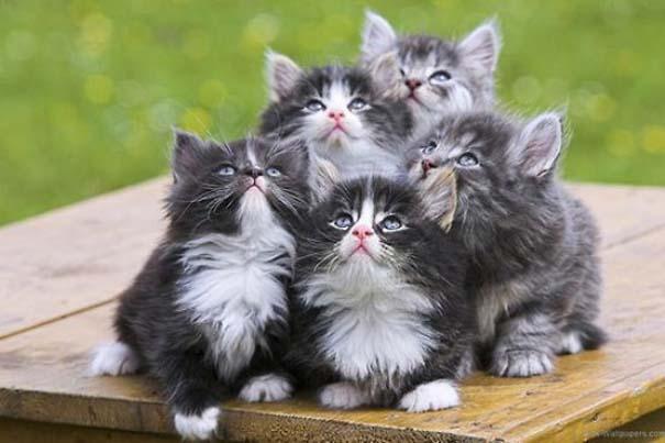 Γάτες που... κάνουν τα δικά τους! (4)