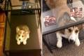 Πριν και μετά: 11 αξιολάτρευτες φωτογραφίες σκύλων που μεγάλωσαν