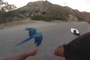 Μοτοσυκλέτα με παπαγάλο μακάο στην Πάρο
