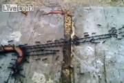 Μυρμήγκια σχηματίζουν αλυσίδα για να αυξήσουν τη δύναμη τους