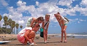 Παραλίες της Καλιφόρνια πλημμύρισαν από τα παράξενα πλάσματα Velella Velella