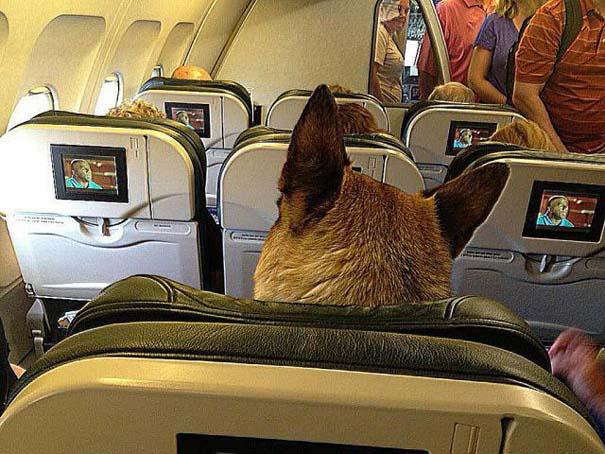 Τα πιο περίεργα που μπορεί να συναντήσεις σε ένα αεροπλάνο (19)