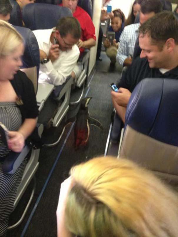 Τα πιο περίεργα που μπορεί να συναντήσεις σε ένα αεροπλάνο (30)