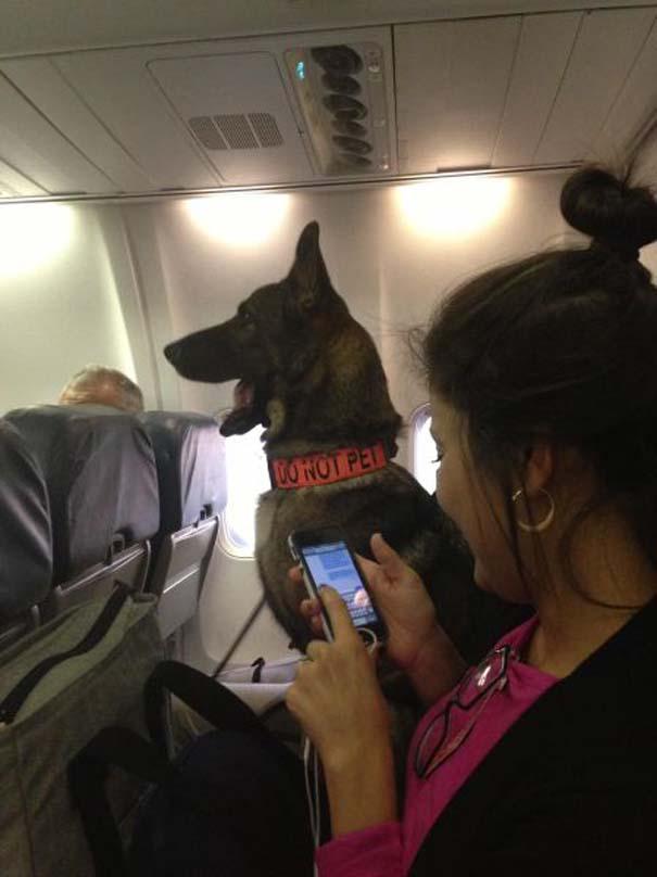 Τα πιο περίεργα που μπορεί να συναντήσεις σε ένα αεροπλάνο (17)