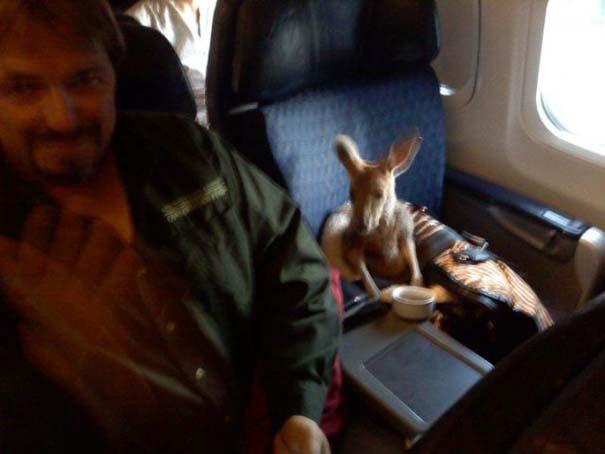 Τα πιο περίεργα που μπορεί να συναντήσεις σε ένα αεροπλάνο (4)
