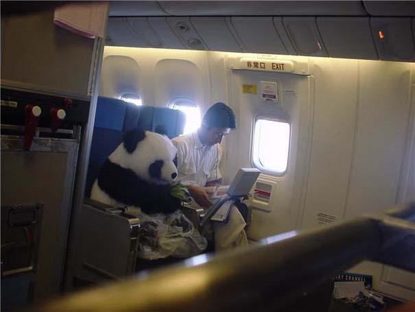 Τα πιο περίεργα που μπορεί να συναντήσεις σε ένα αεροπλάνο (7)
