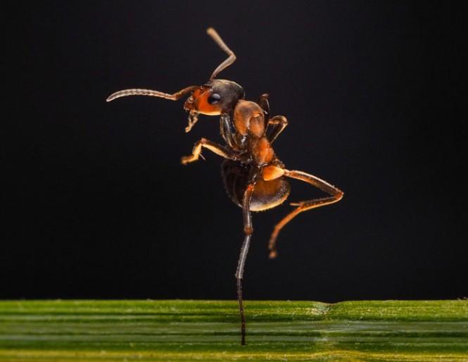Το μπαλέτο ενός μυρμηγκιού   Φωτογραφία της ημέρας