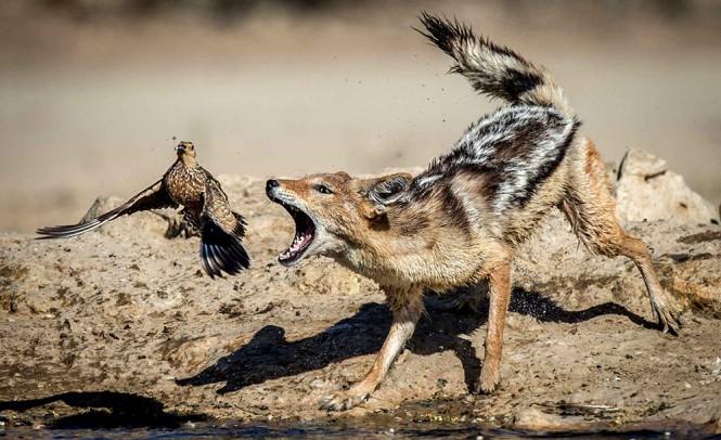 Ήρθαν τα άγρια να διώξουν τα ήμερα | Φωτογραφία της ημέρας