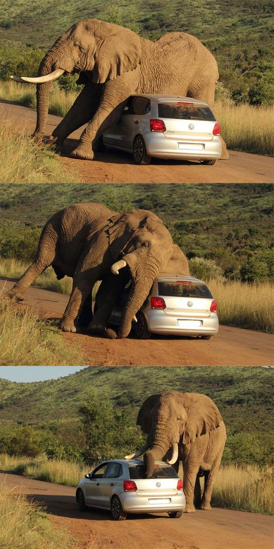 Γιατί δεν πρέπει να πλησιάσεις ποτέ έναν ελέφαντα που έχει φαγούρα | Φωτογραφία της ημέρας
