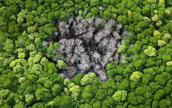 Το σημάδι ενός κεραυνού μέσα στο δάσος   Φωτογραφία της ημέρας