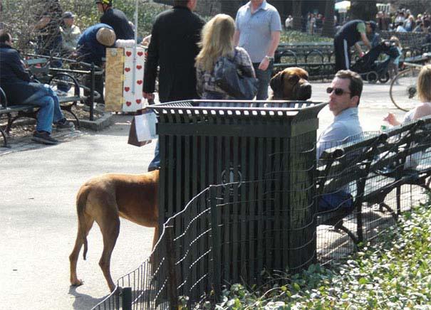 Φωτογραφίες σκύλων τραβηγμένες την κατάλληλη στιγμή (4)