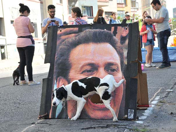 Φωτογραφίες σκύλων τραβηγμένες την κατάλληλη στιγμή (1)