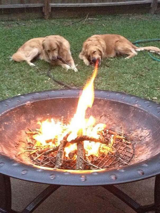 Φωτογραφίες σκύλων τραβηγμένες την κατάλληλη στιγμή (5)