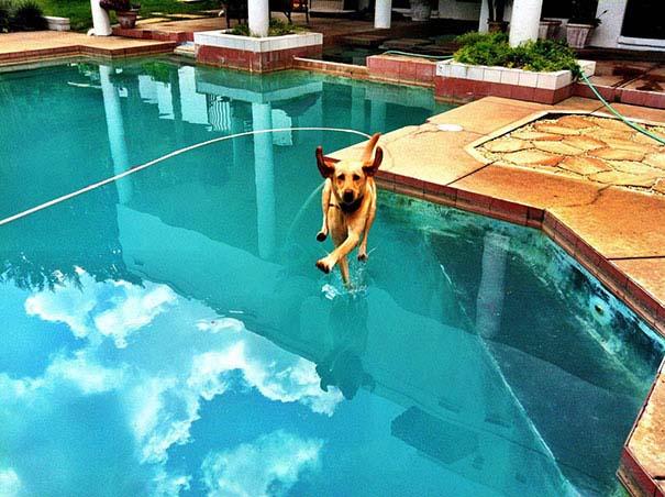 Φωτογραφίες σκύλων τραβηγμένες την κατάλληλη στιγμή (14)