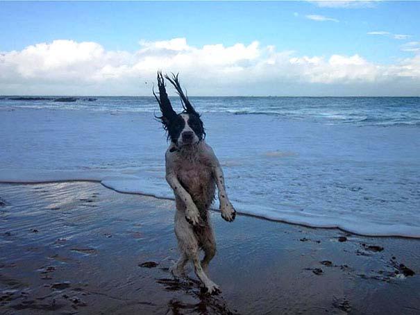 Φωτογραφίες σκύλων τραβηγμένες την κατάλληλη στιγμή (17)
