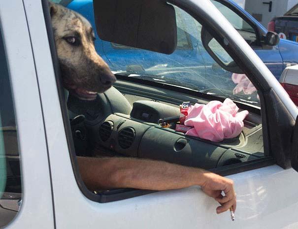 Φωτογραφίες σκύλων τραβηγμένες την κατάλληλη στιγμή (27)