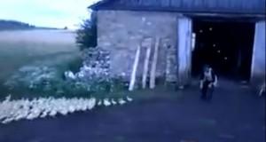 Ρώσος διατάζει στρατό από πάπιες κι αυτές υπακούν με απόλυτη πειθαρχία (Video)